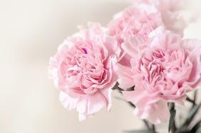 flowers-1390807_640