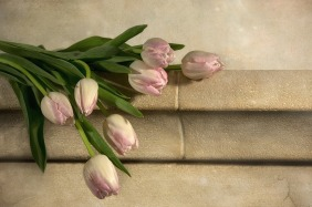 tulips-1139133_960_720