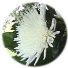 anastasia-blanca