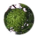 anastasia-dark-green